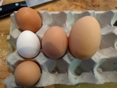 Australia House Sit Eggs